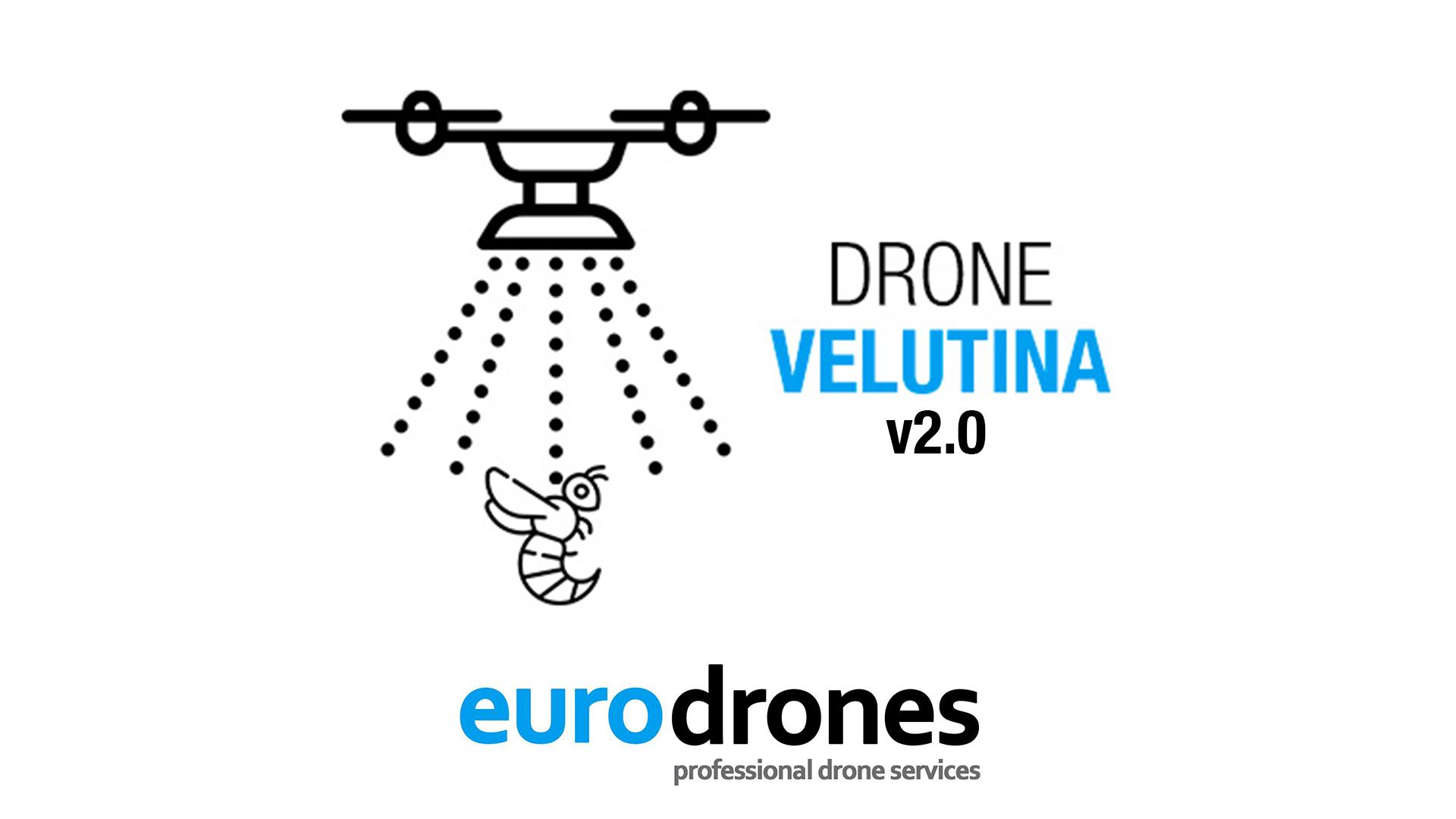 velutina eurodrones